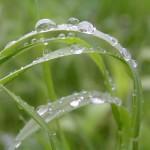 Rain_on_grass
