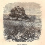 Depiction of the Oak of Mamre, by HB Tristram, 1865