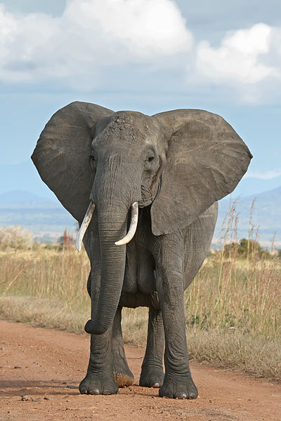 dating word in spanish